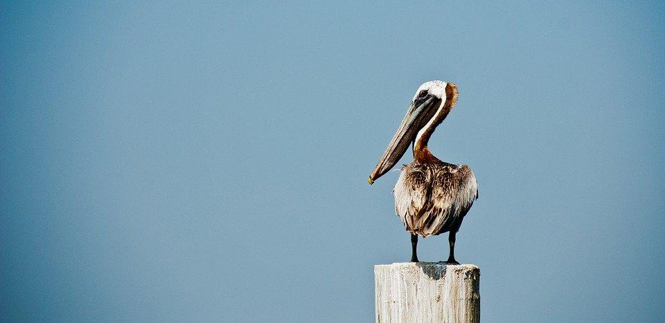 Pelican Rock Cabo San Lucas