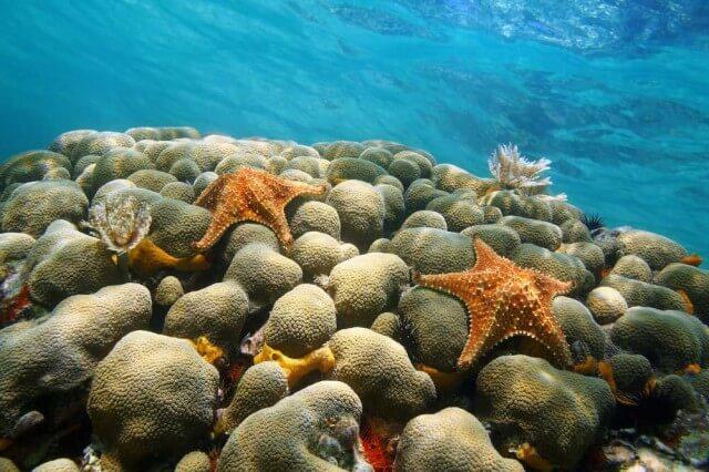 underwater-coral_shutterstock_187112657